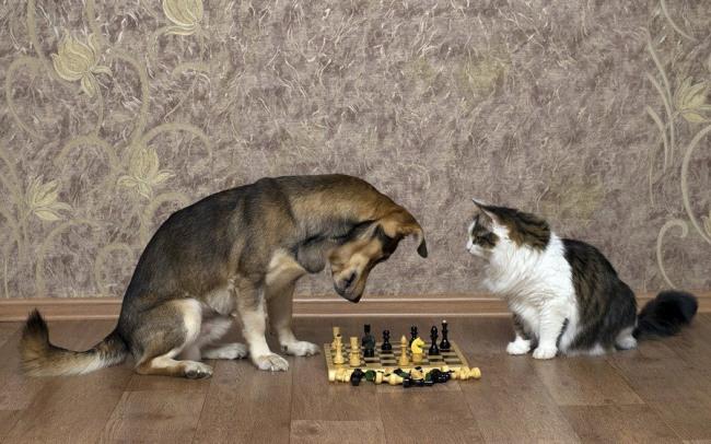 Фото прикол  про собак, котів та шахи
