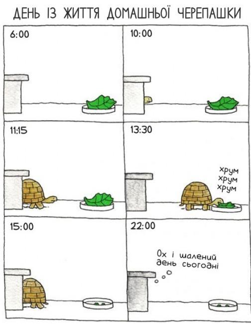 Малюнок  про черепаху