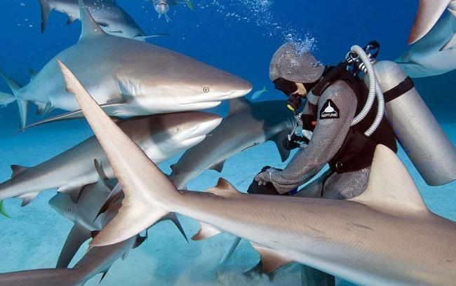 Фото прикол  про водолазів та акул
