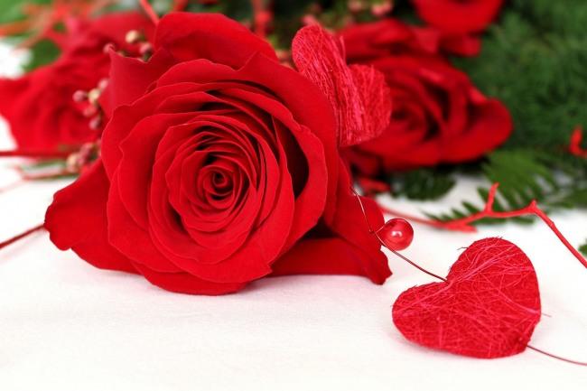 Фото прикол  про троянду та романтику