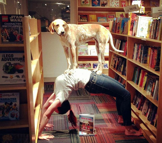 Фото прикол  про собак та йогу