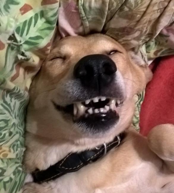 Фото прикол  про собак та радість