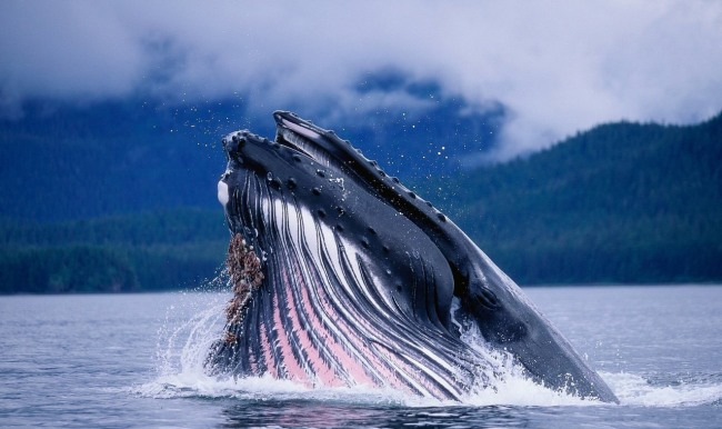 Фото прикол  про китів