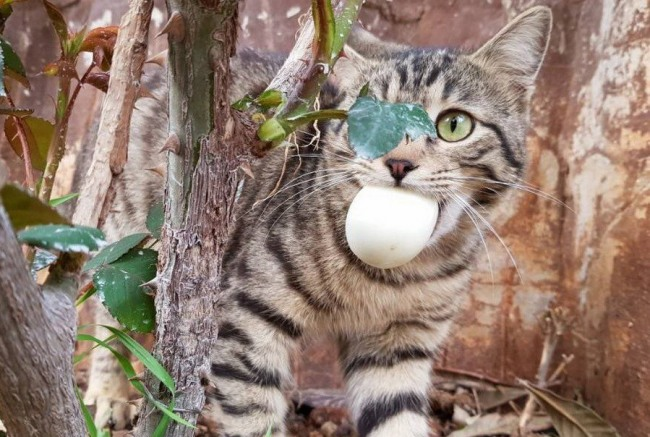 Фото прикол  про котів та яйця
