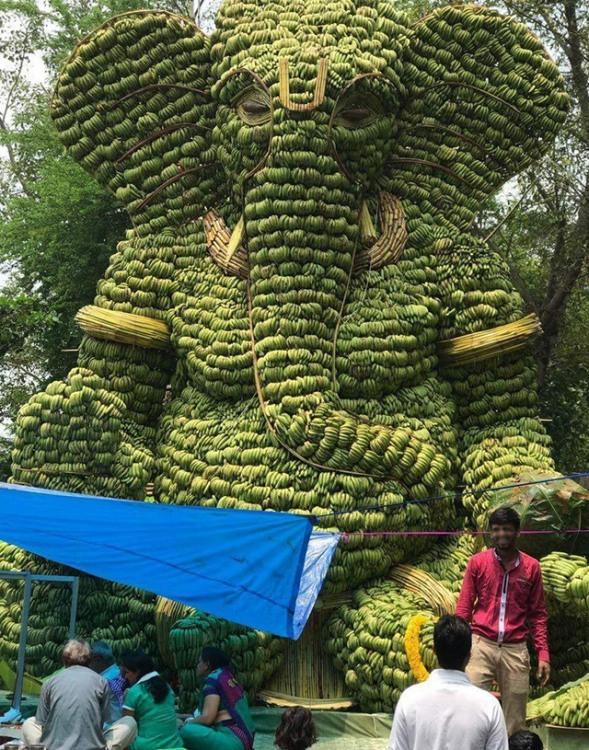 Фото прикол  про слонів та банан