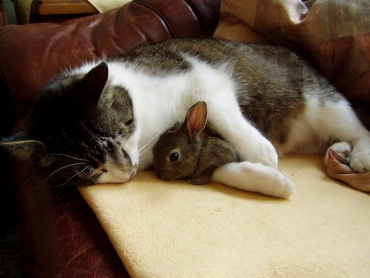Фото прикол  про котів та кролів