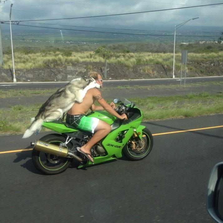 Фото прикол  про собак та мотоциклістів