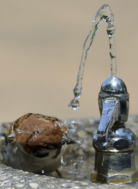 Фото прикол  про птахів та воду