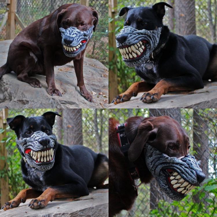 Фото прикол  про собак та маску