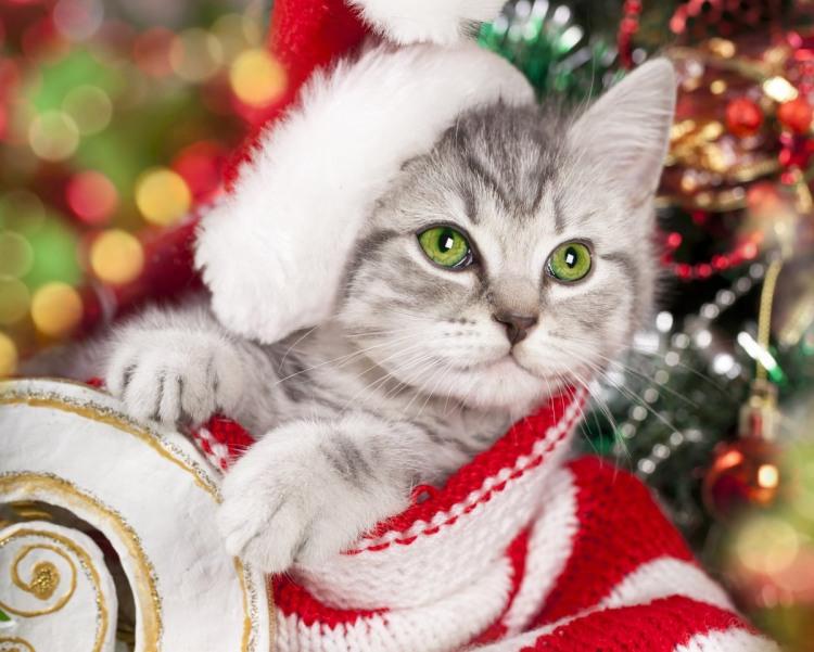 Фото прикол  про котів та новий рік