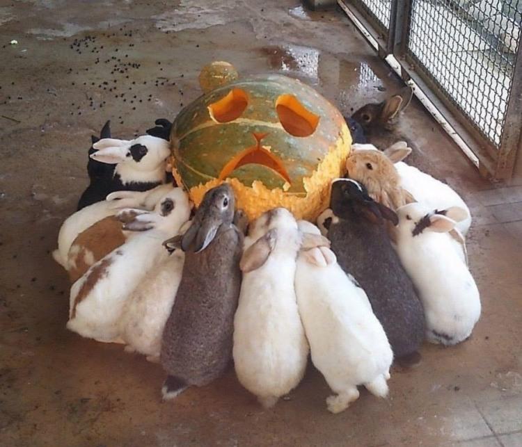 Фото прикол  про кролів та хеллоуїн