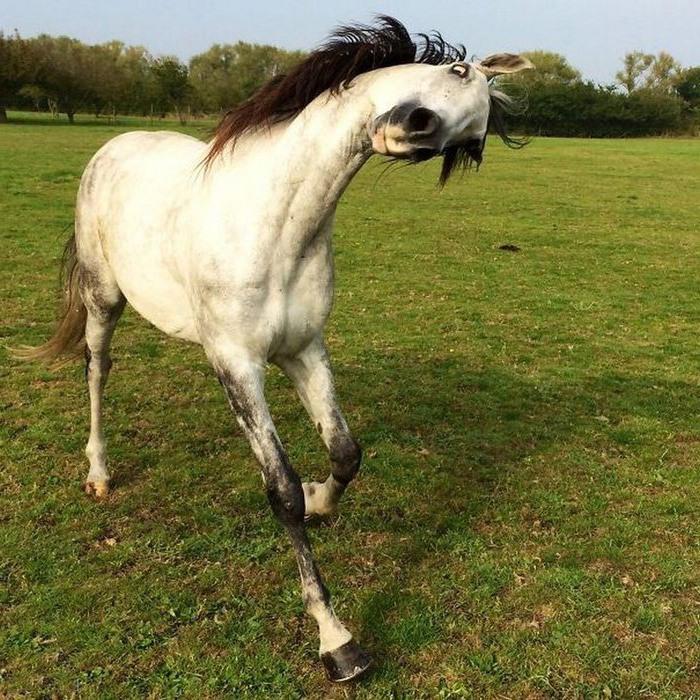 Фото прикол  про коней