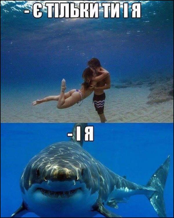 Фото прикол  про акул, романтику чорний