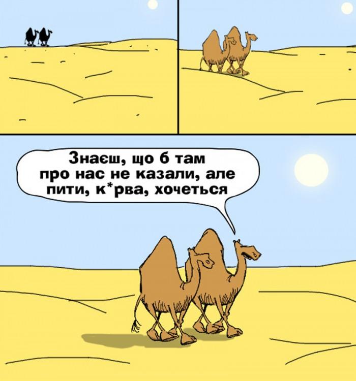 Малюнок  про верблюдів, спрагу з матюками