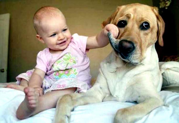 Фото прикол  про дітей та собак