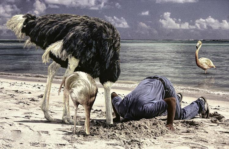 Фото прикол  про страусів