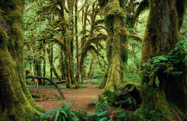 Фото прикол  про ліс
