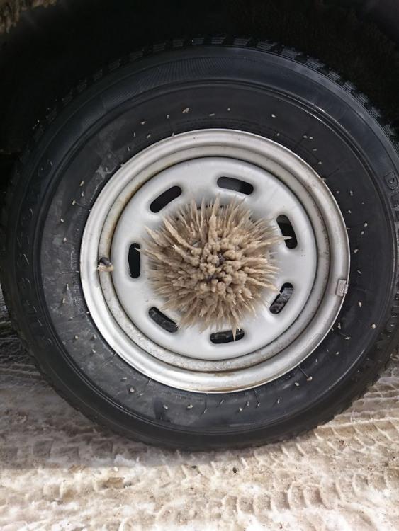 Фото прикол  про колесо та лід