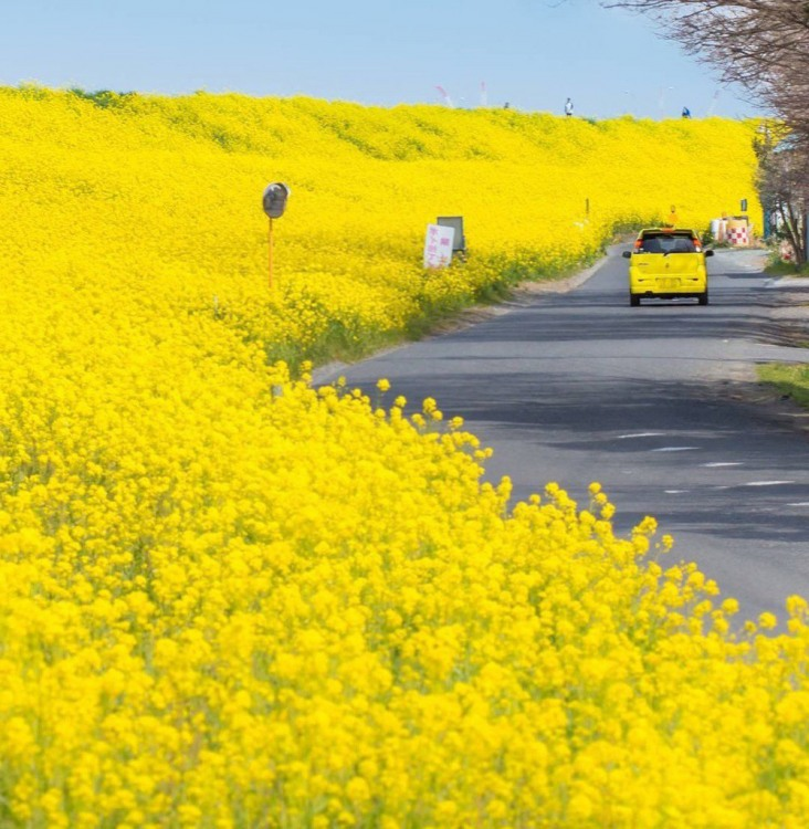 Фото прикол  про квіти та кольори