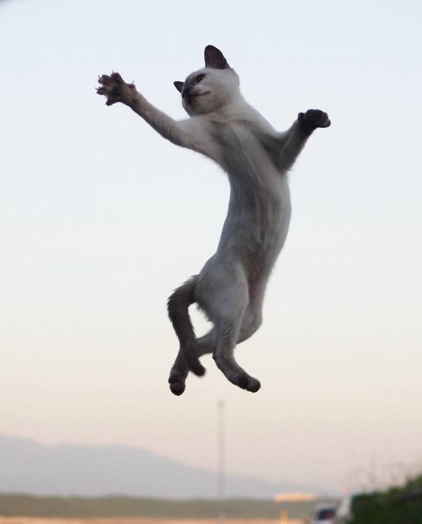 Фото прикол  про котів та стрибки