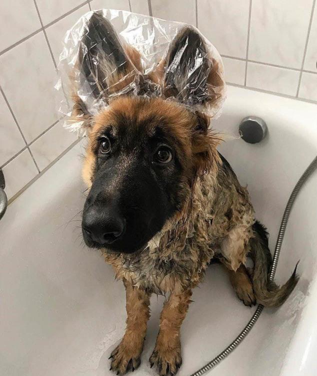 Фото прикол  про собак та миття