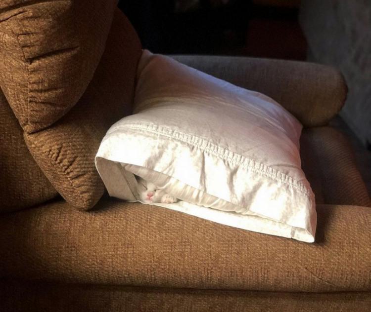 Фото прикол  про котів та подушку
