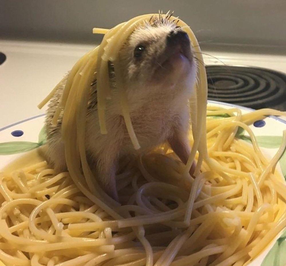 Приколы про макароны картинки