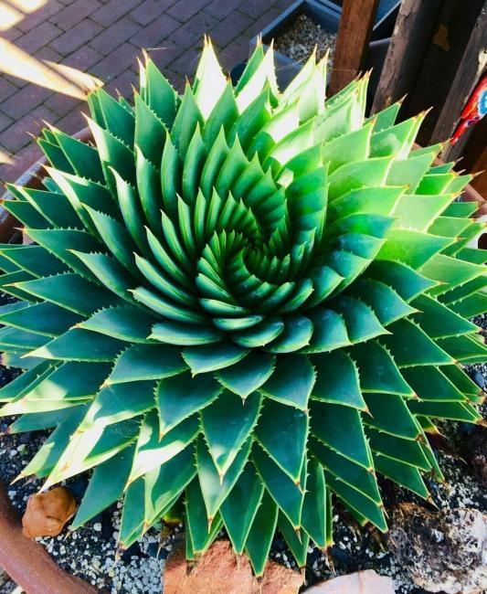 Фото прикол  про рослини