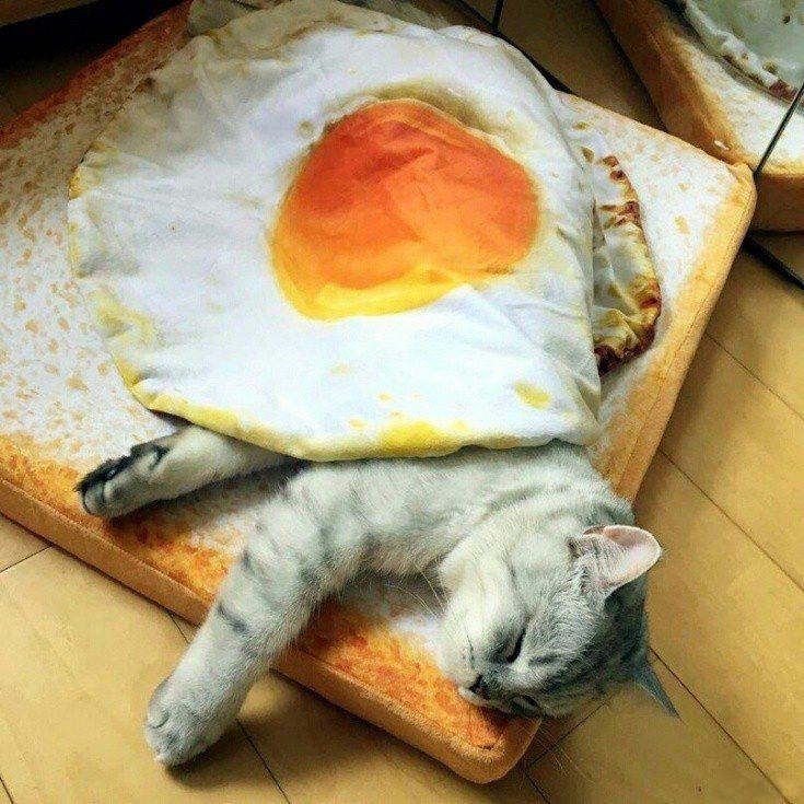 Фото прикол  про котів, ковдру та яйця