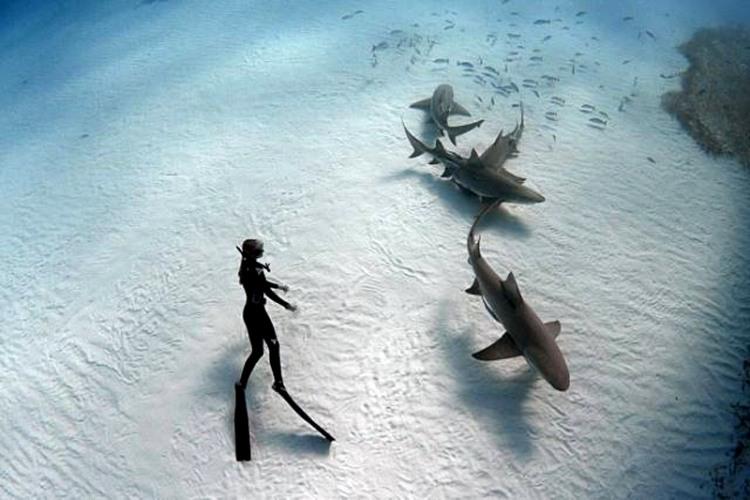 Фото прикол  про акул та водолазів