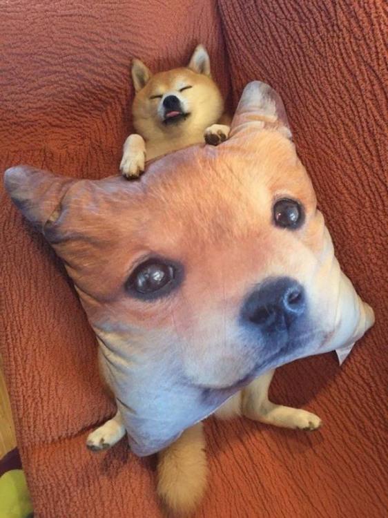 Фото прикол  про собак та подушку