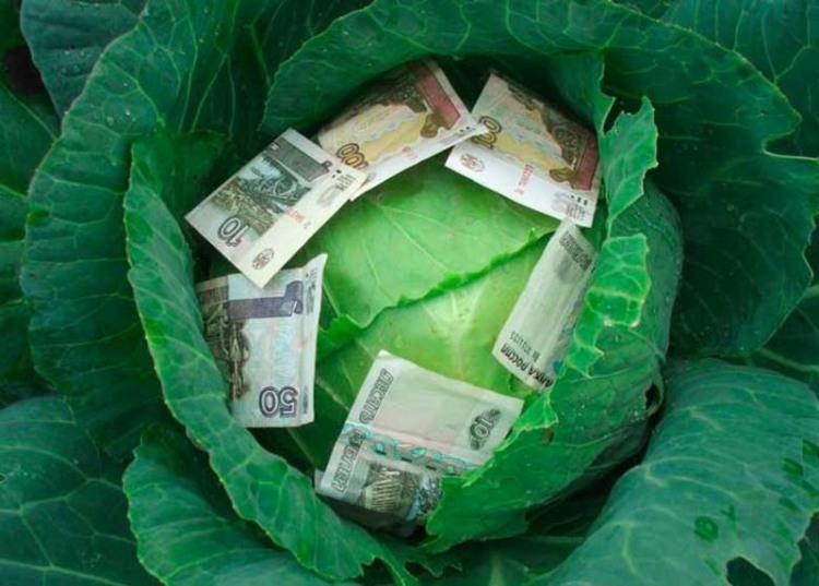 Фото прикол  про капусту та гроші