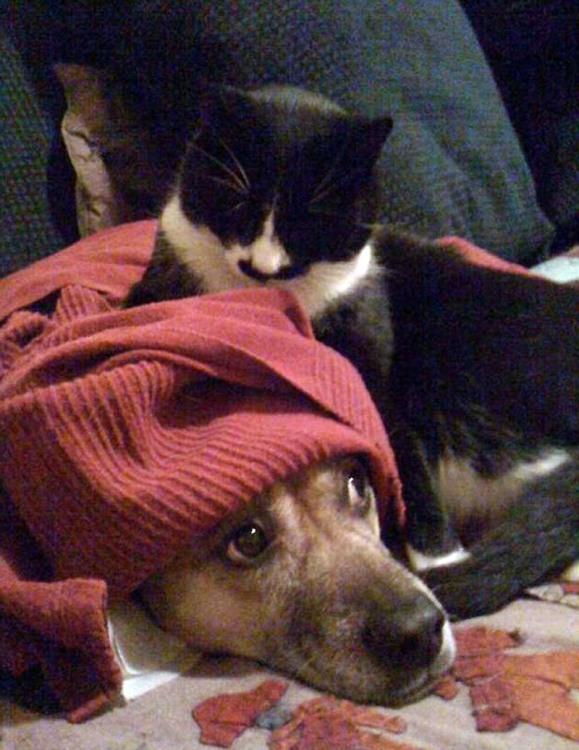 Фото прикол  про собак та котів