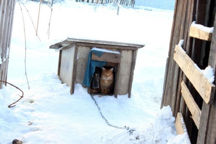 Фото прикол  про будку, собак та котів