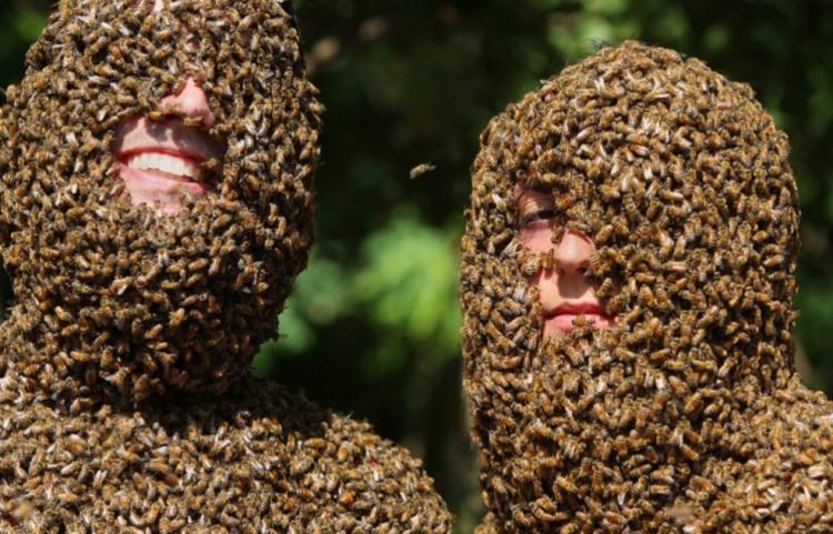 Фото прикол  про бджіл