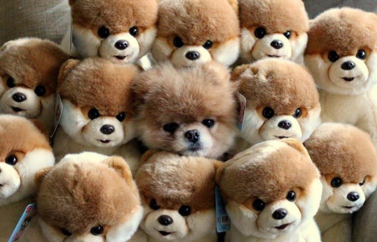 Фото прикол  про собак та іграшки