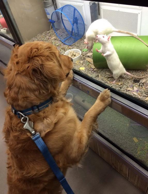 Фото прикол  про собак та щурів