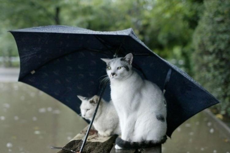 Фото прикол  про котів та дощ