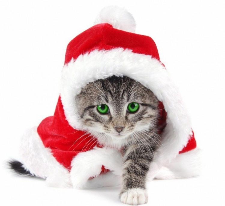 Фото прикол  про кошенят та новий рік