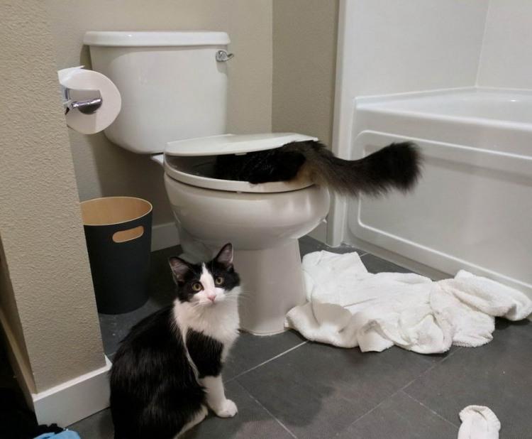 Фото прикол  про котів та унітаз