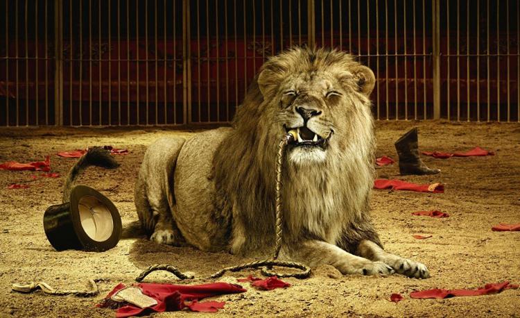 Фото прикол  про лева, дресирувальника чорний