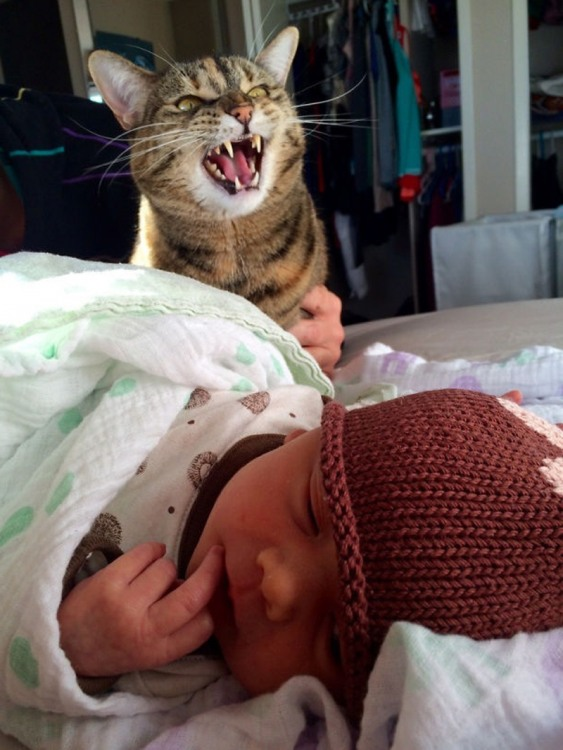 Фото прикол  про котів, дітей та злість