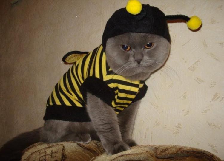 Фото прикол  про котів, костюм та бджіл
