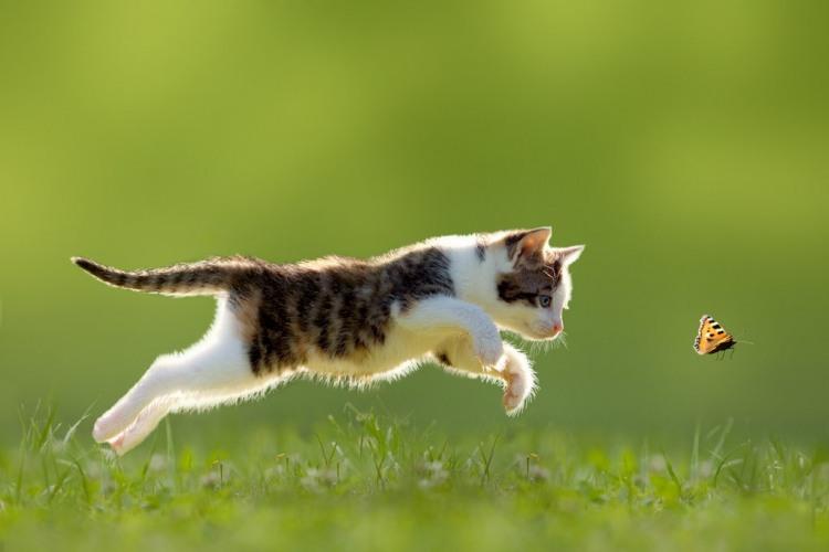 Фото прикол  про кошенят та метеликів