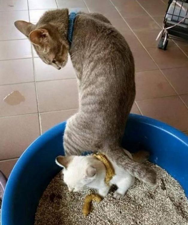 Фото прикол  про котів, дефекацію огидний