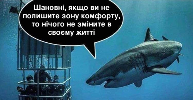 Фото прикол  про акул цинічний