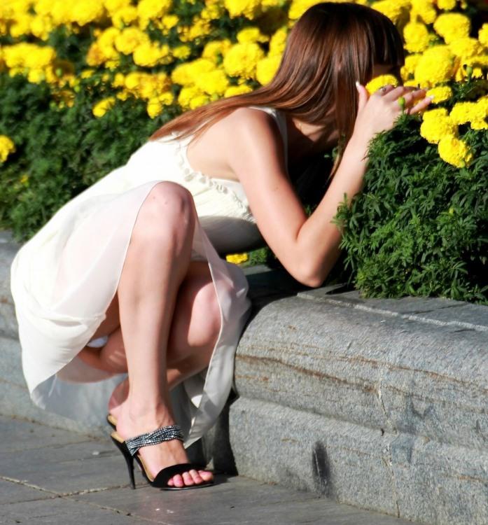 Фото прикол  про труси, засвітила, квіти вульгарний