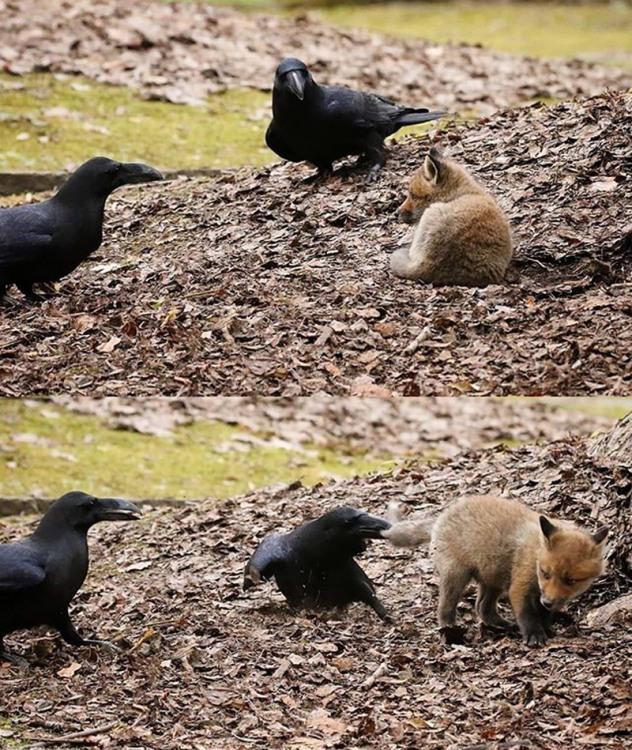 Фото прикол  про ворону та лисицю