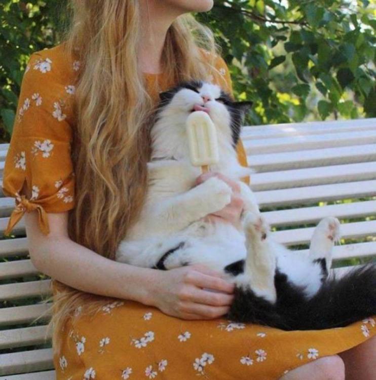 Фото прикол  про котів та морозиво