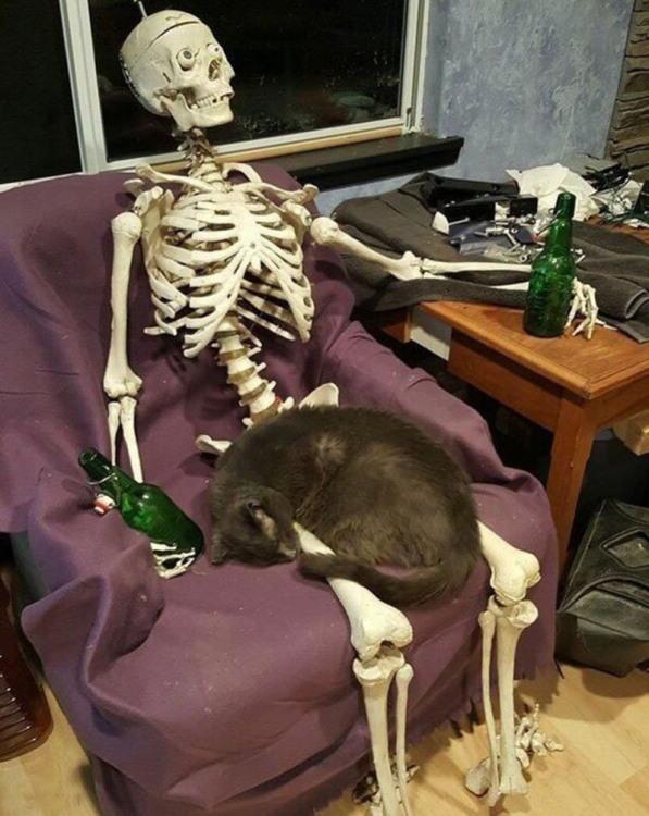 Фото прикол  про скелет, котів чорний